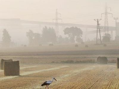 White storks leave Polish nests early after hot, dry summer