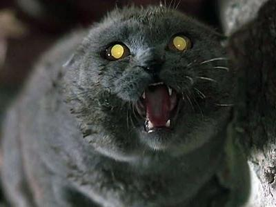 The Very Specific Reason The Original Pet Sematary Chose Its Breed Of Cat