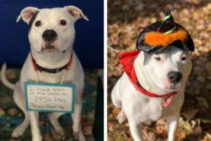 Four Years Later, This Sweet Dog Is Still Looking For The Perfect Home