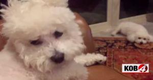 Wag! Strikes Again - Another Pup Dies Under The Care of Dog Sitter