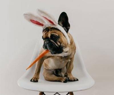 These Photos Of Dogs In Bunny Ears For Easter 2019 Make It A Very Hoppy Holiday