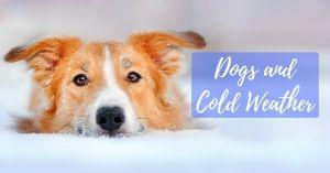 Dogs and Cold Weather
