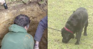 110-Pound Dog Was Rescued From A Small Drain Pipe