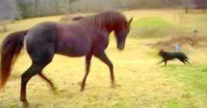 VIDEO: Watch What Happens When This Horse And Dog Decide It's Playtime!