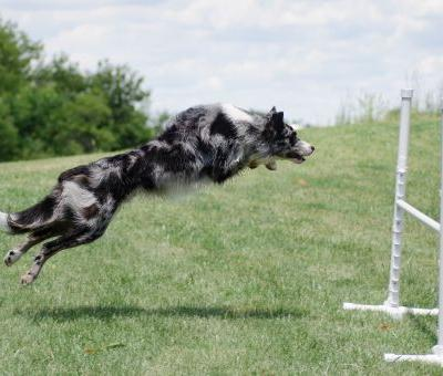 4 Reasons Agility is Amazing