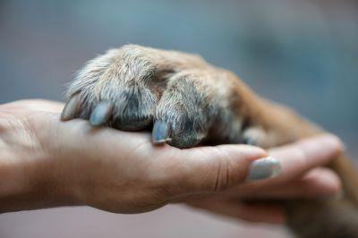 How to Stay Emotionally Healthy When Your Dog Is Terminally Ill