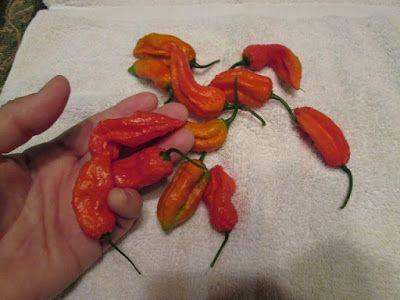 Ghost Peppers!