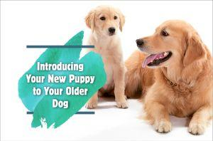 Introducing Your New Puppy To Your Older Dog