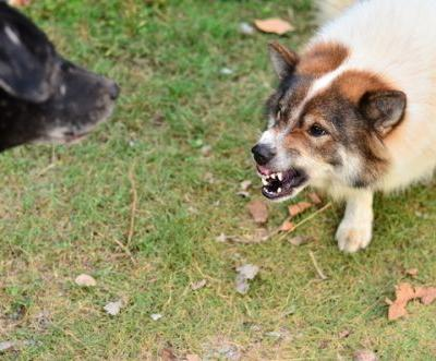 5 Ways to Avoid Disaster During Your Dog's Next Playdate