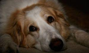 3 Amazing Ways To Honor A Collie Who Passed Away