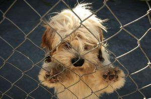 Bill Intended To Save Shelter Pets May Do More Harm Than Good