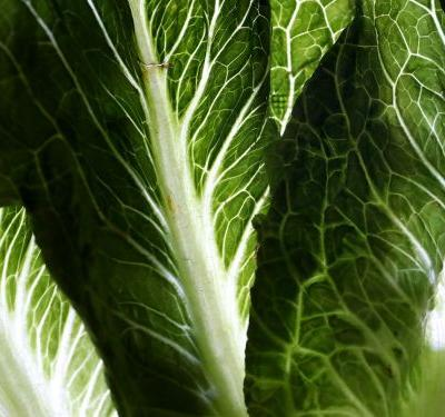 E. Coli-Tainted Romaine Lettuce Traced to California Growing Regions
