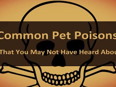 Common Pet Poisons