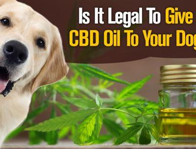 Is It Legal to Give CBD Oil To Your Dog?