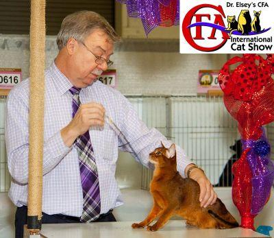 Dr Elseys CFA International Cat Show