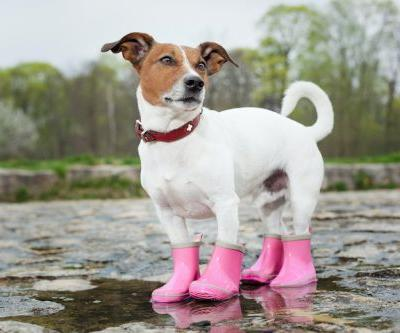 Do Dogs Need Shoes?
