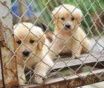 No Pet Store Puppies Day