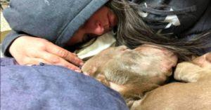 Woman Comforts Dog During The Final Stages of His Battle With Cancer