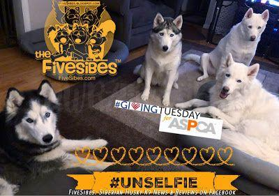 For GivingTuesday FiveSibes Team Up With ASPCA ~and~ It's a Thankful Flashback Friday!
