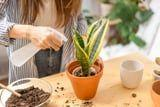 15 Live Plants on Amazon That Will Transform Your Home Into a Green Oasis