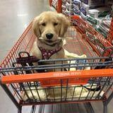 13 Stores That Will Welcome Your Dog With Open Arms