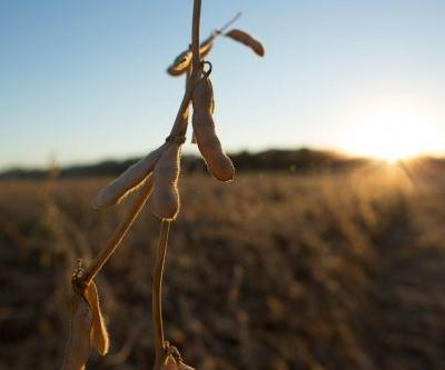 Inari Reaps $89M and Eyes Global Farm Markets for Gene-Edited Seeds
