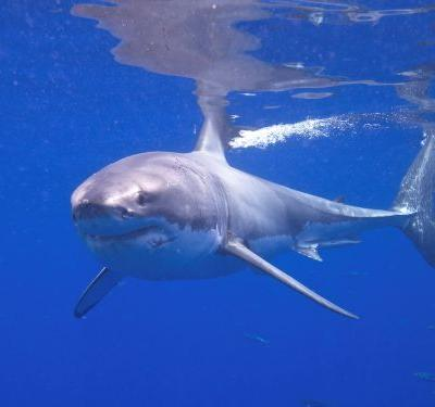 Cape beach closed to swimmers after confirmed shark sighting