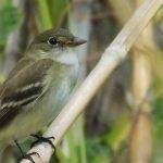 The First Bird Tracking Station Is Up and Running in Costa Rica