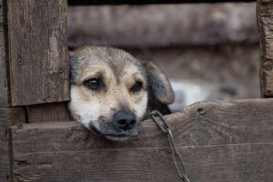5 Important Steps To Take When You Witness Animal Cruelty