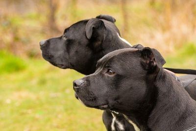 Michigan Appeals Court Dismisses Lawsuit in Fatal Shooting of Two Family Dogs by Police
