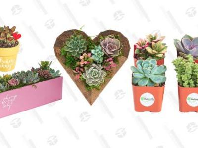 Fill Your Empty Home With These On-Sale Succulents From Amazon
