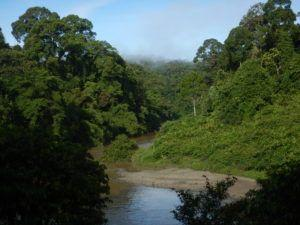 SMRT Sequencing to Help Reveal Secrets of the Soil in Understudied South-East Asian Rainforests