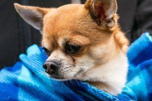 7 Dog Breeds That Require Little Grooming