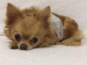 Ailing Senior Dog Needs Our Help To Get Well & Find A New Home