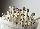 Just one dose of magic mushrooms can reduce depression and anxiety in cancer patients, study finds