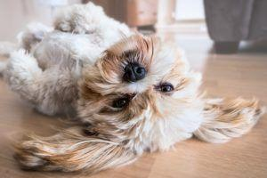 The Top 5 Reasons Dog Parents Are Giving Coconut Oil To Their Pups