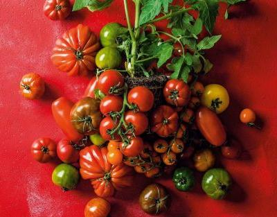 How to survive the heatwave in the kitchen: Diana Henry's refreshing tomato salads