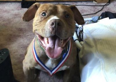 I recently adopted a 10 year-old Pitbull mix I