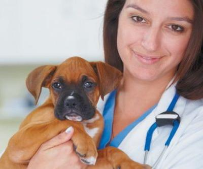 Get to Know the Basics on Puppy Pills and Vaccinations