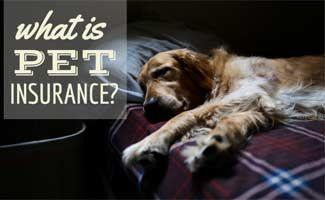 What Is Pet Insurance? Do You Need It?