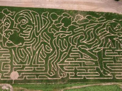 Forget Crop Circles. Are Aliens Attempting To Communicate Using Dogs?
