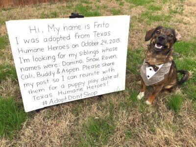 Frito the rescue dog was reunited with his long-lost siblings after posting a callout on Facebook