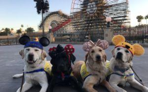 Training Service Dogs Take An Adorable Field Trip To Disneyland