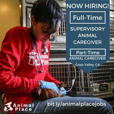 We're hiring for TWO positions at the sanctuary in Grass