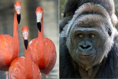 Bronx Zoo's adorable animals ready for their close-up