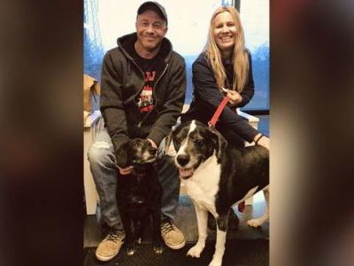 Dogs that escaped owner's euthanasia request find new home