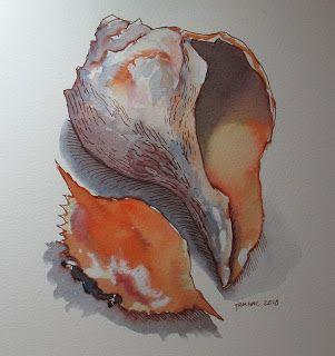 Shells: Watercolor, Pen and Ink