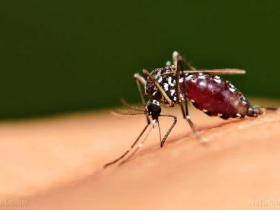 Managing dengue naturally: A review of plant-based treatments with anti-viral effects