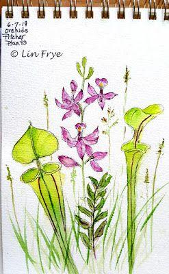 Pitcher Plants and Orchids