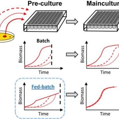 Precultures Grown under Fed‐Batch Conditions Increase the Reliability and Reproducibility of High‐Throughput Screening Results